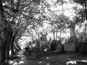 Napier Cemetery 1
