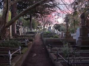 Napier Hill Cemetery 5